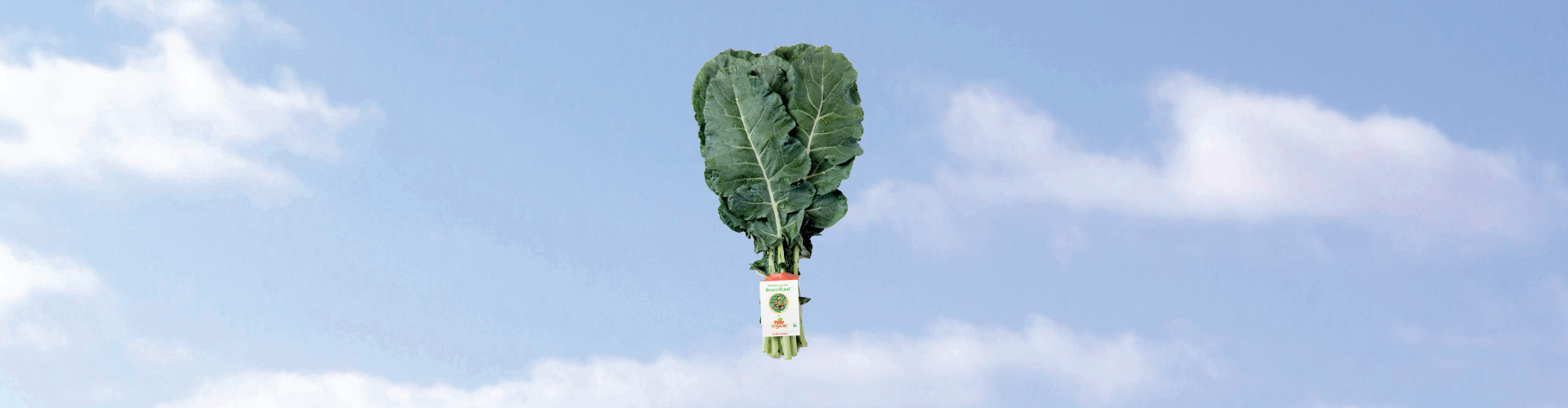 Introducing BroccoLeaf™
